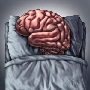 cervello dormiamo